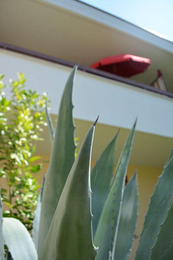 Aloe cactus Alto Adige